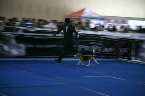 Thailanddogshow_News-03